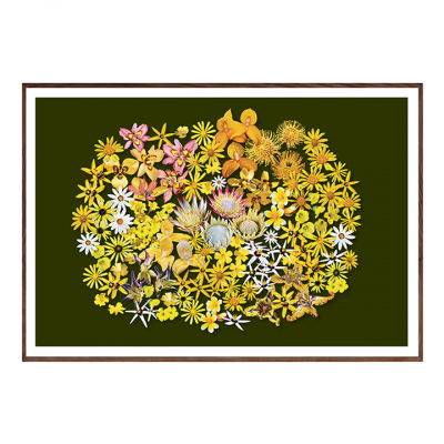 FYNBOS FLOWERS ON GREEN ART PRINT