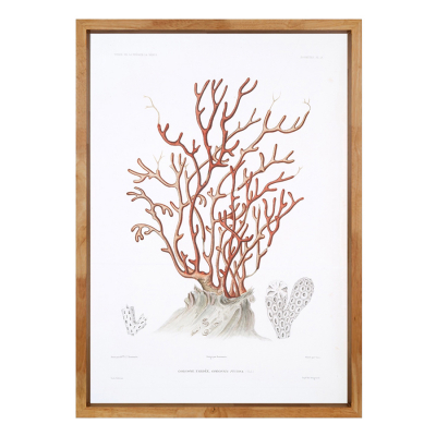 CORAL PLATE 3