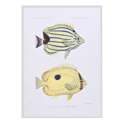 VINTAGE TROPICAL FISH 5
