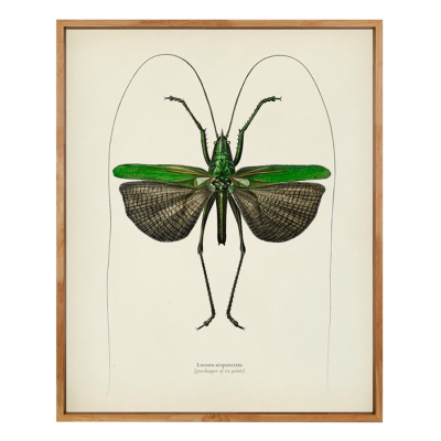 WINGED INSECTS 14